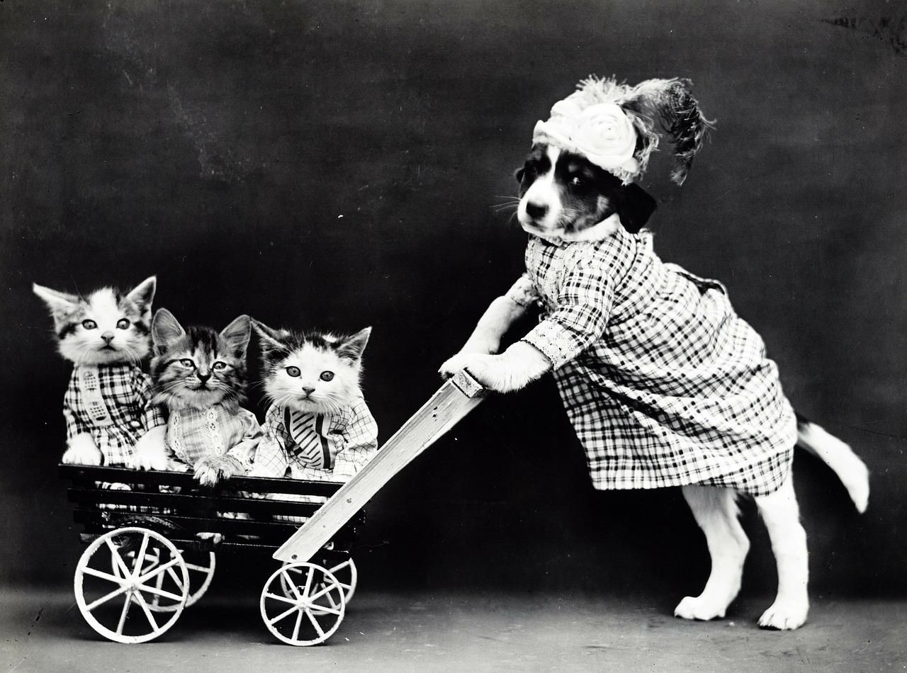 kočárek pro kočičky